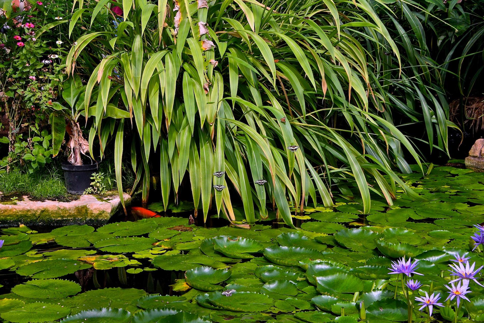 """Don Jennings - """"Butterfly Pond"""""""