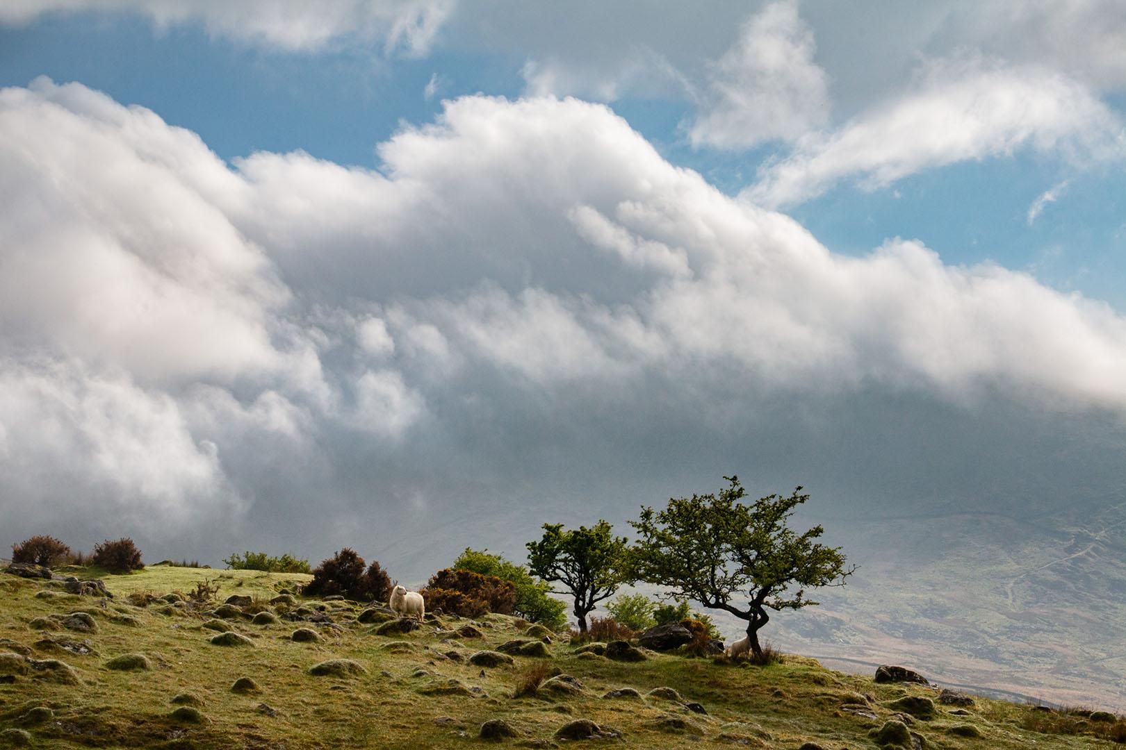 """John Shuttleworth - """"Cloud Blown"""""""