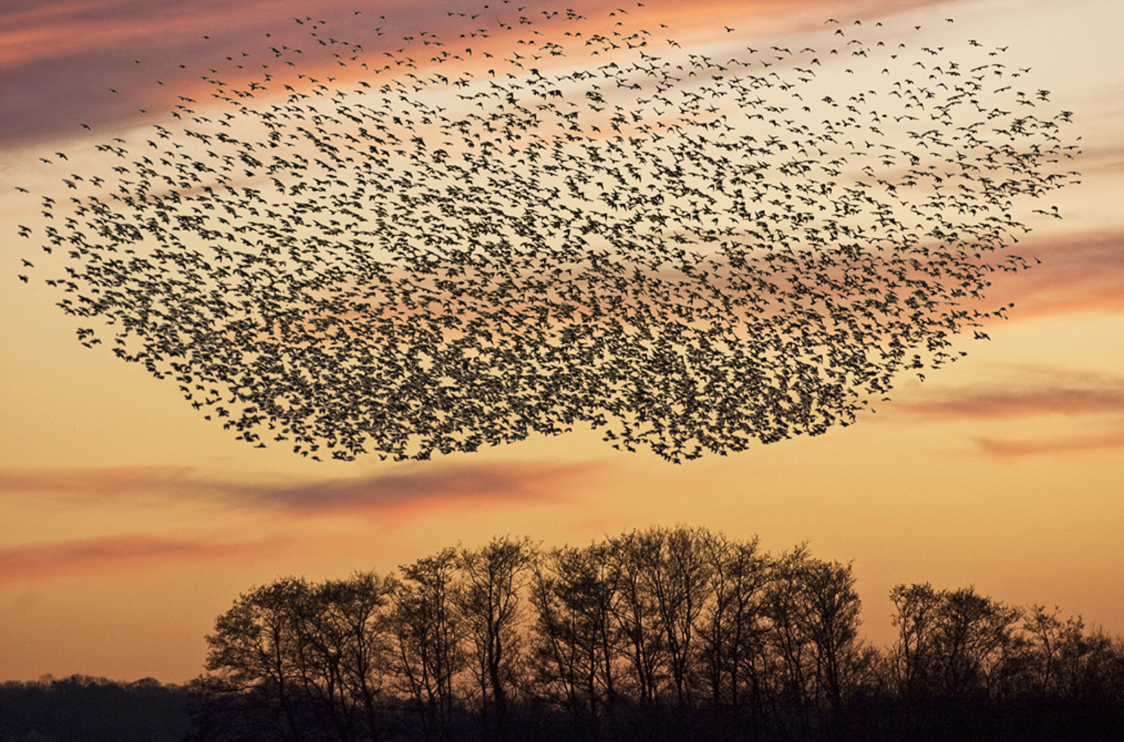 "Ray Allen - ""Starling Roost"""