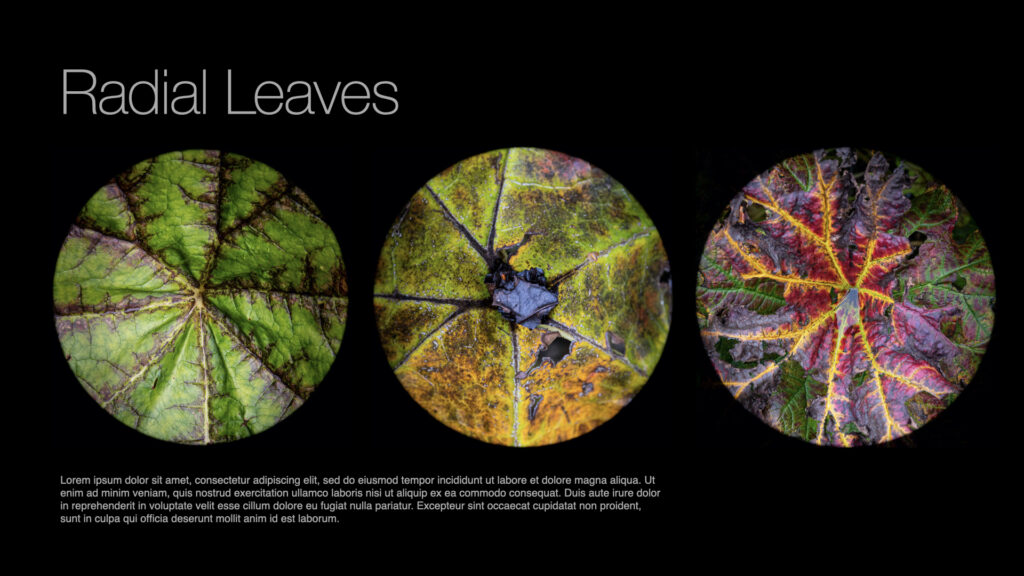 Radial Leaves.007